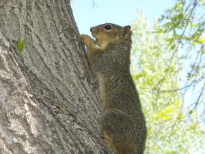 Photo of a squirrel in a tree.